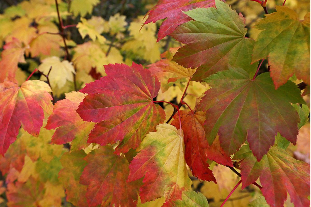 Fall S Color Show News Dailyrecordnews Com