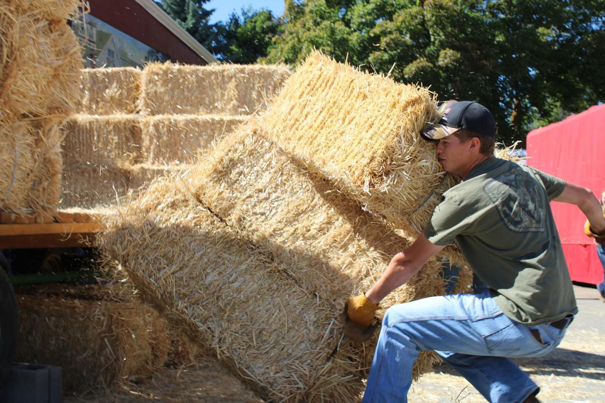hay bucking