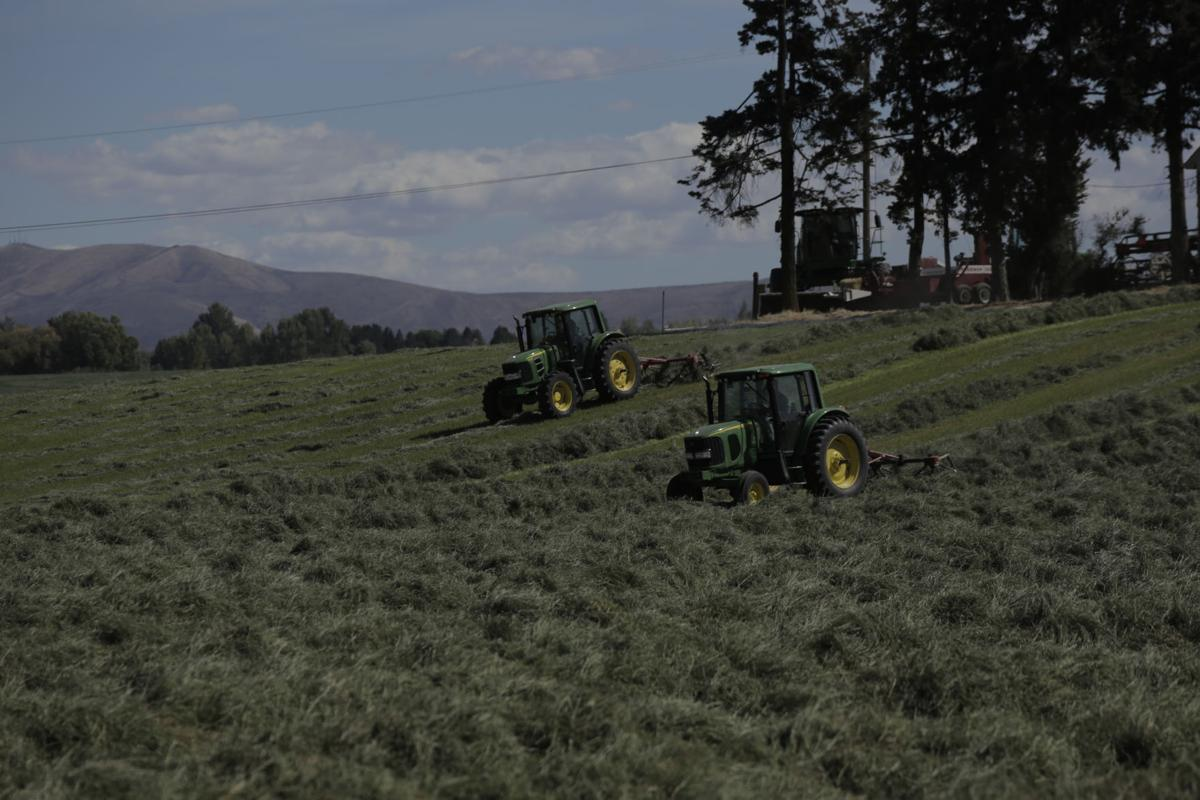 Local producers see high prices, demand for 2020 timothy hay season