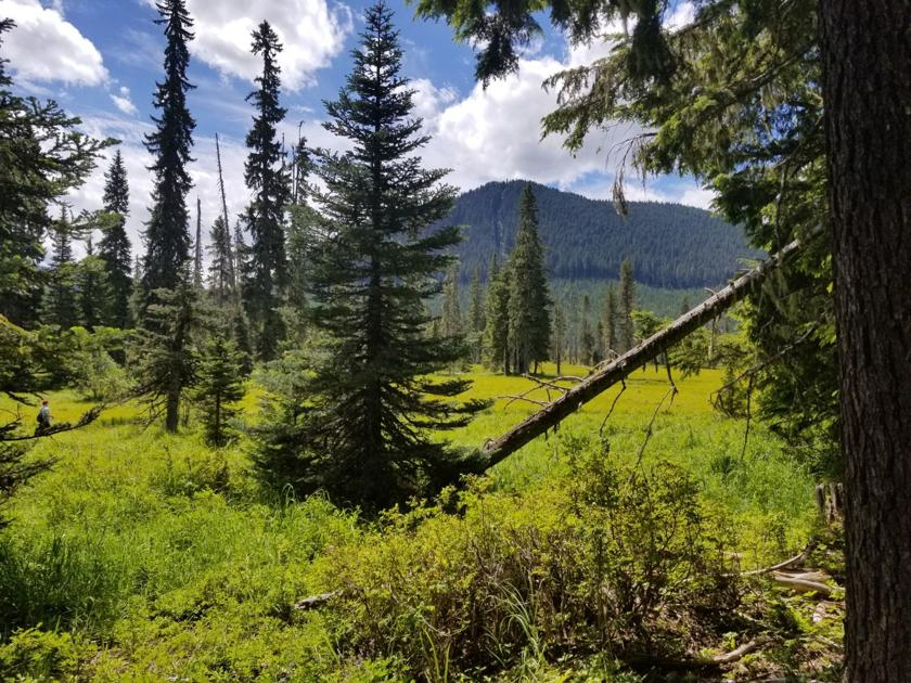 Gifford Pinchot National Forest Offers Spectacular