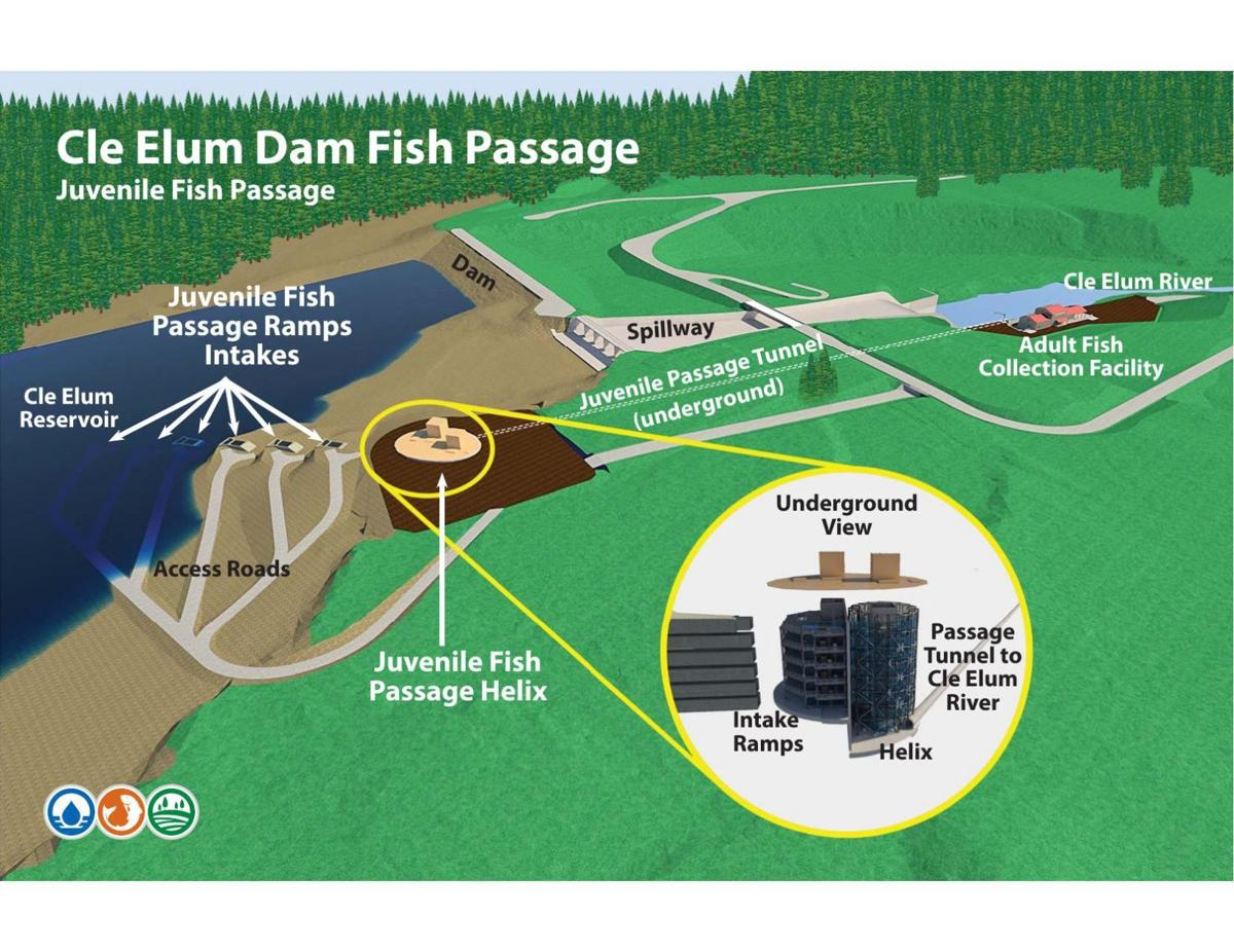 Cle elum fish passage for Dam fish count