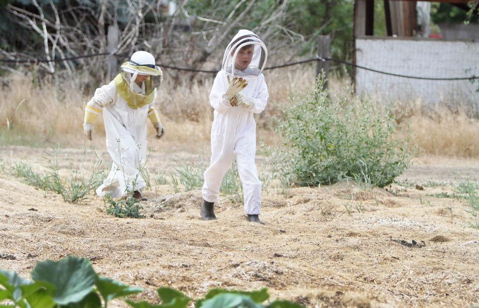 Young beekeepers