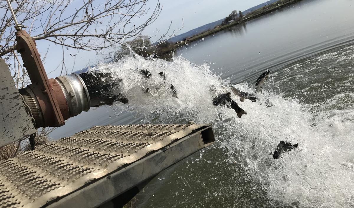 Fish stocking season in full swing at local ponds | News