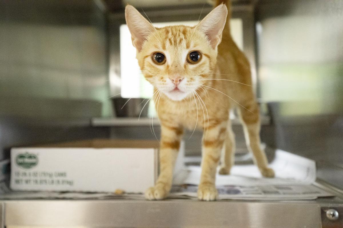 Pets of the Week, Aug. 21, 2019.