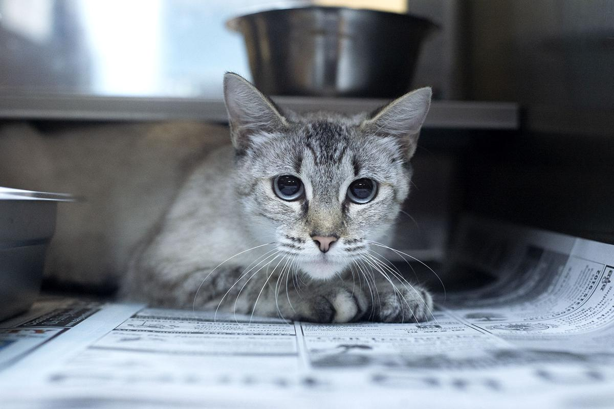 Pets of the Week, August 3, 2021
