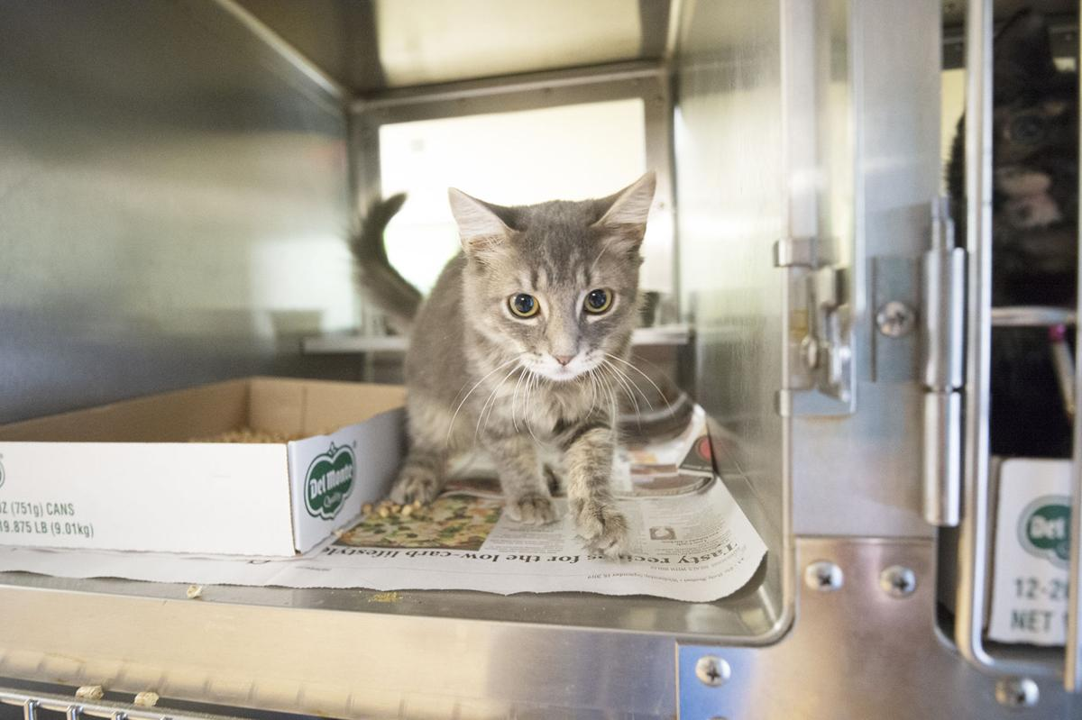 Pets of the Week, Oct. 9, 2019.