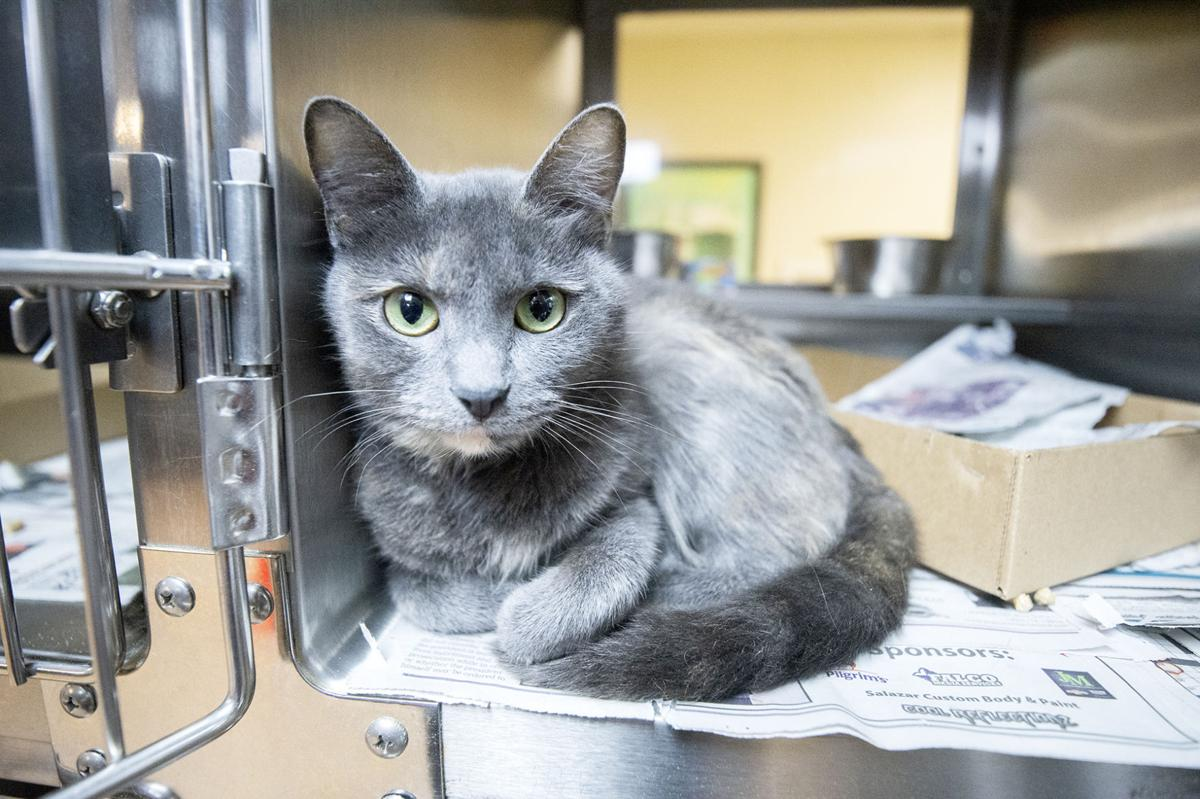 Pets of the Week, March 4, 2020.