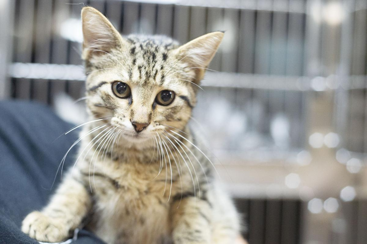Pets of the Week at the Nacogdoches Animal Shelter, July 21, 2020.