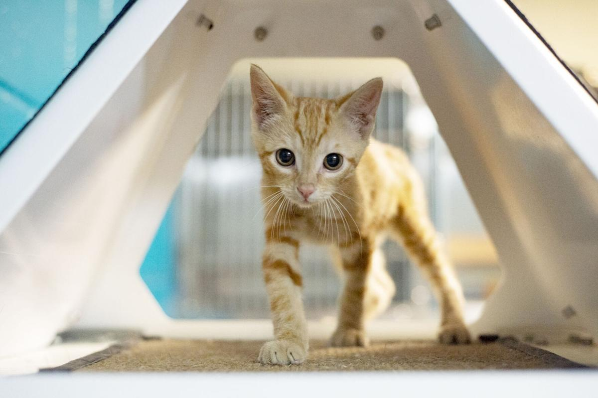 Pets of the Week, Aug. 25, 2020