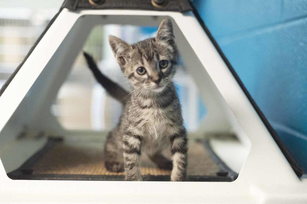 Pets of the week, Sept. 29, 2020