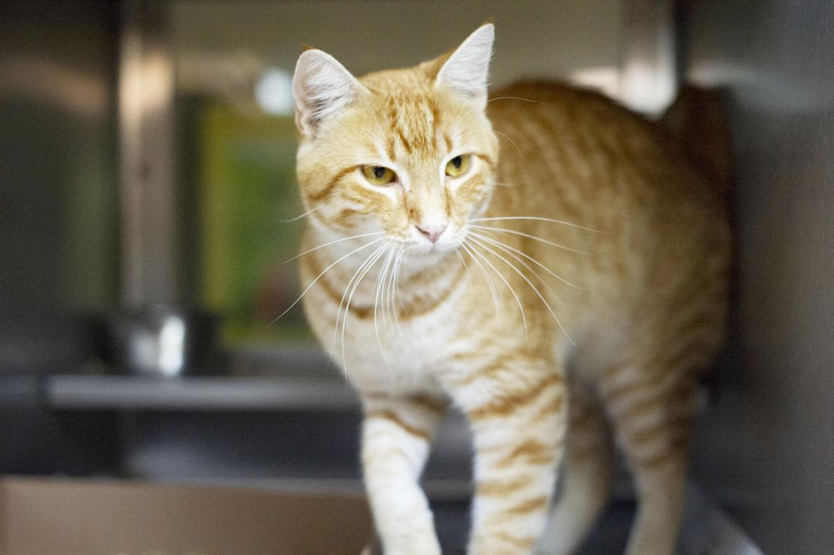 Pets of the Week, Aug. 18, 2020