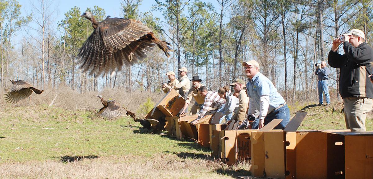 turkey release
