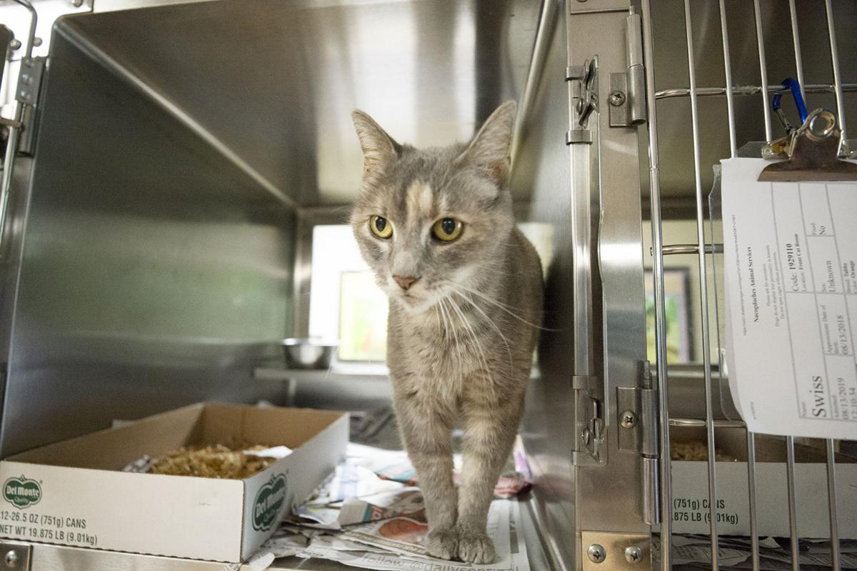 Pets of the Week, Sept. 11, 2019