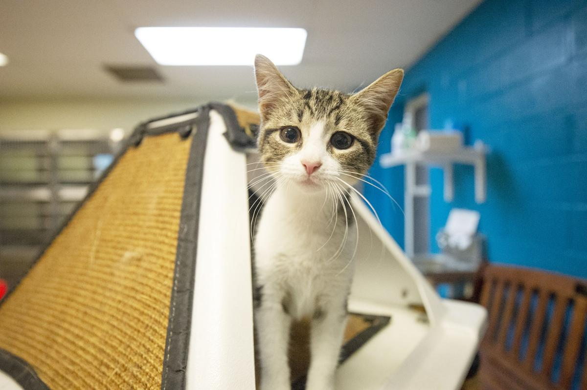Pets of the Week, Oct. 30, 2019.