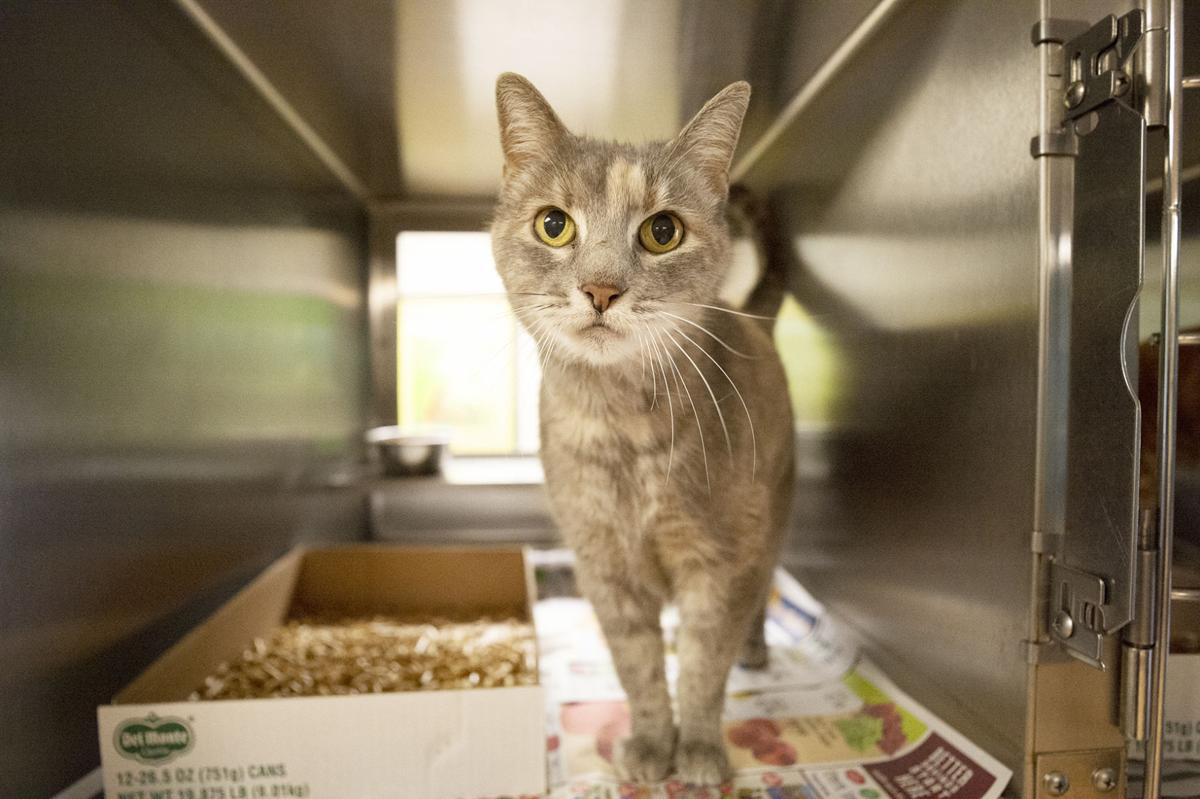 Pets of the Week, Sept. 25, 2019.