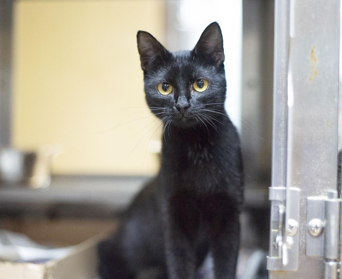 Pets of the Week, Sept. 1, 2020