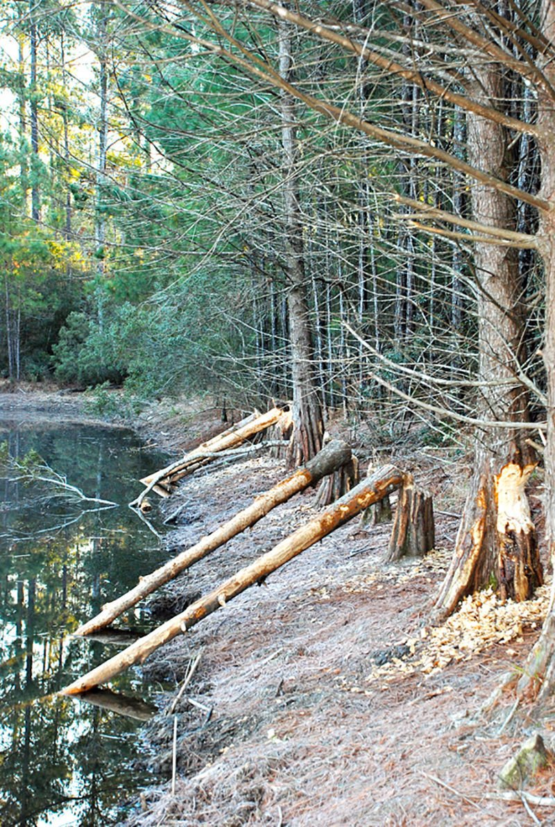 Neches River tributary
