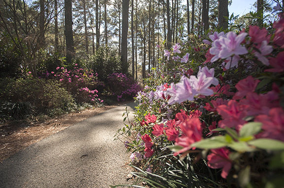 Flowers in bloom at the Ruby Mize Azalea Garden at SFA on Friday, March 3, 2017.