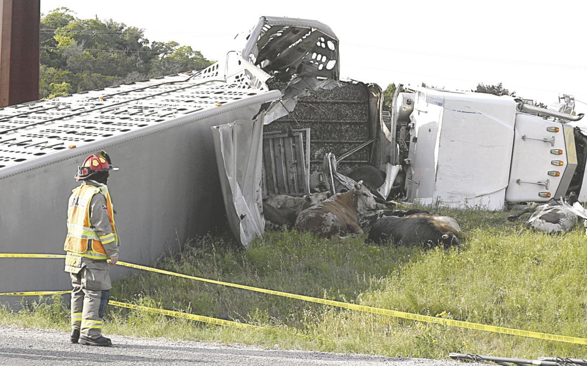 Cattle truck overturns: Livestock injured, killed in tractor-trailer