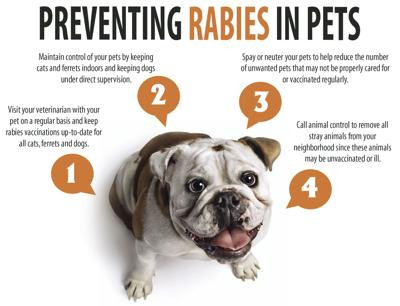 Preventing rabies in pets