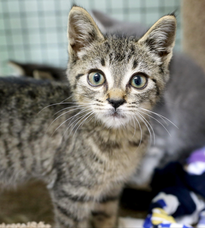 Kittens, other animals up for adoption
