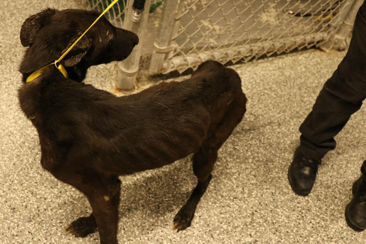 Dogs rescued Sterling Heights animal cruelty