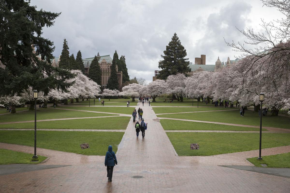Despite upcoming cherry blossom bloom, avoid coming to campus amid coronavirus, UW urges