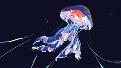 UW-housed research program finds jellyfish may be benefiting from climate change