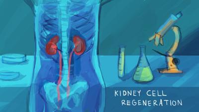 UW Medicine researchers exploring kidney regeneration using nanobodies