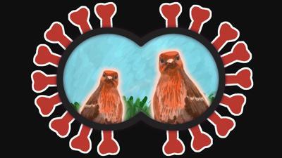 Birds and social distancing.jpg