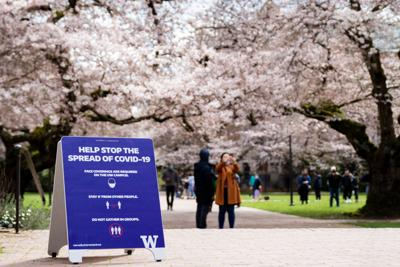 A sign details the Covid-19 guidelines which need to be followed by those venturing to see the cherry blossoms.