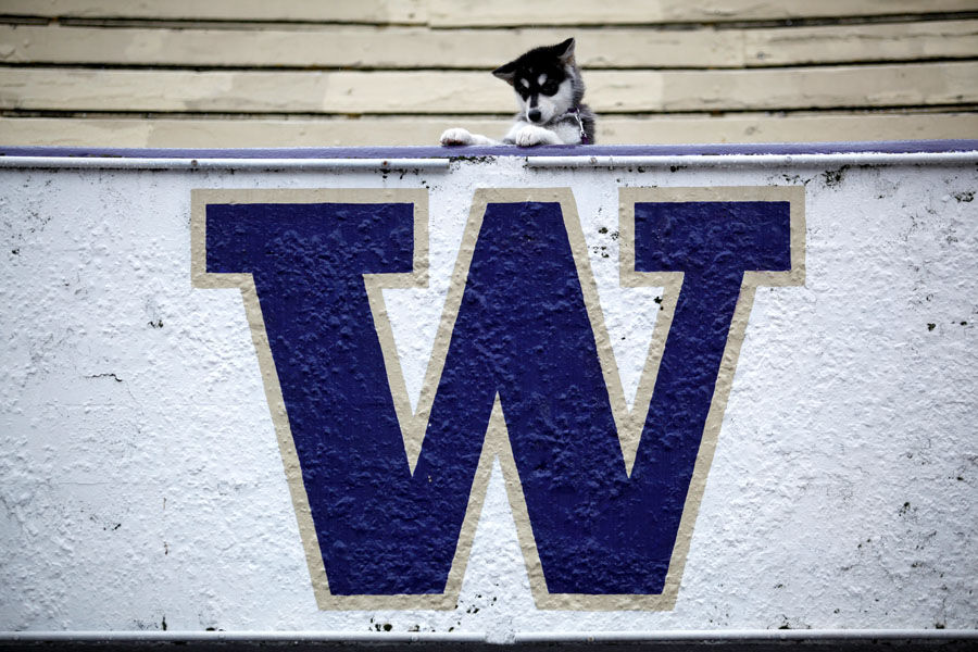 'Dubs' announced as new live UW mascot