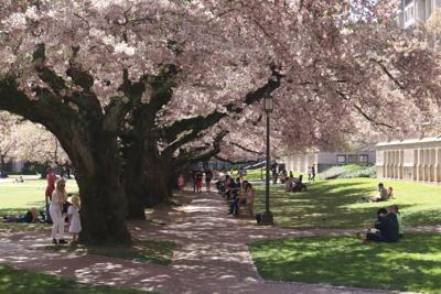 University of Washington after in-person classes are back