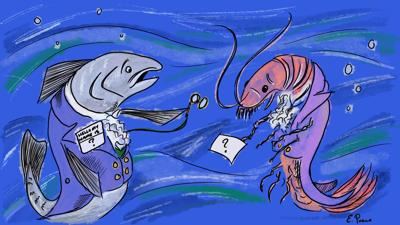 Something's fishy: Recent study discusses harmful consequences of mislabeled seafood
