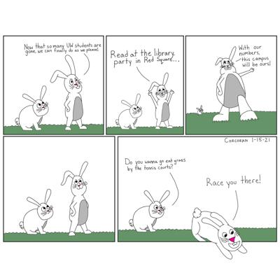 Rowdy rabbits