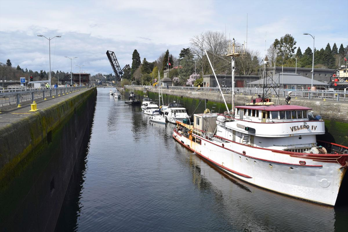 Boats are loaded into the large locks to reach Salmon Bay.