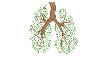 Climate Lungs