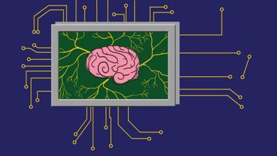 Where neurons and money meet technology: Two lesser-known STEM minors