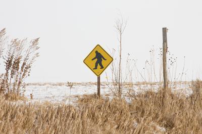 Not a Bigfoot crossing