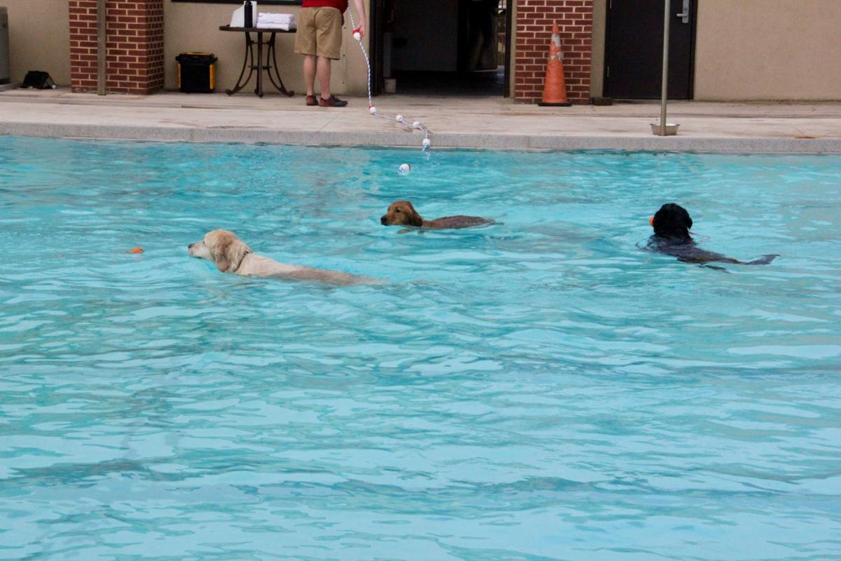Pups paddle through the pool