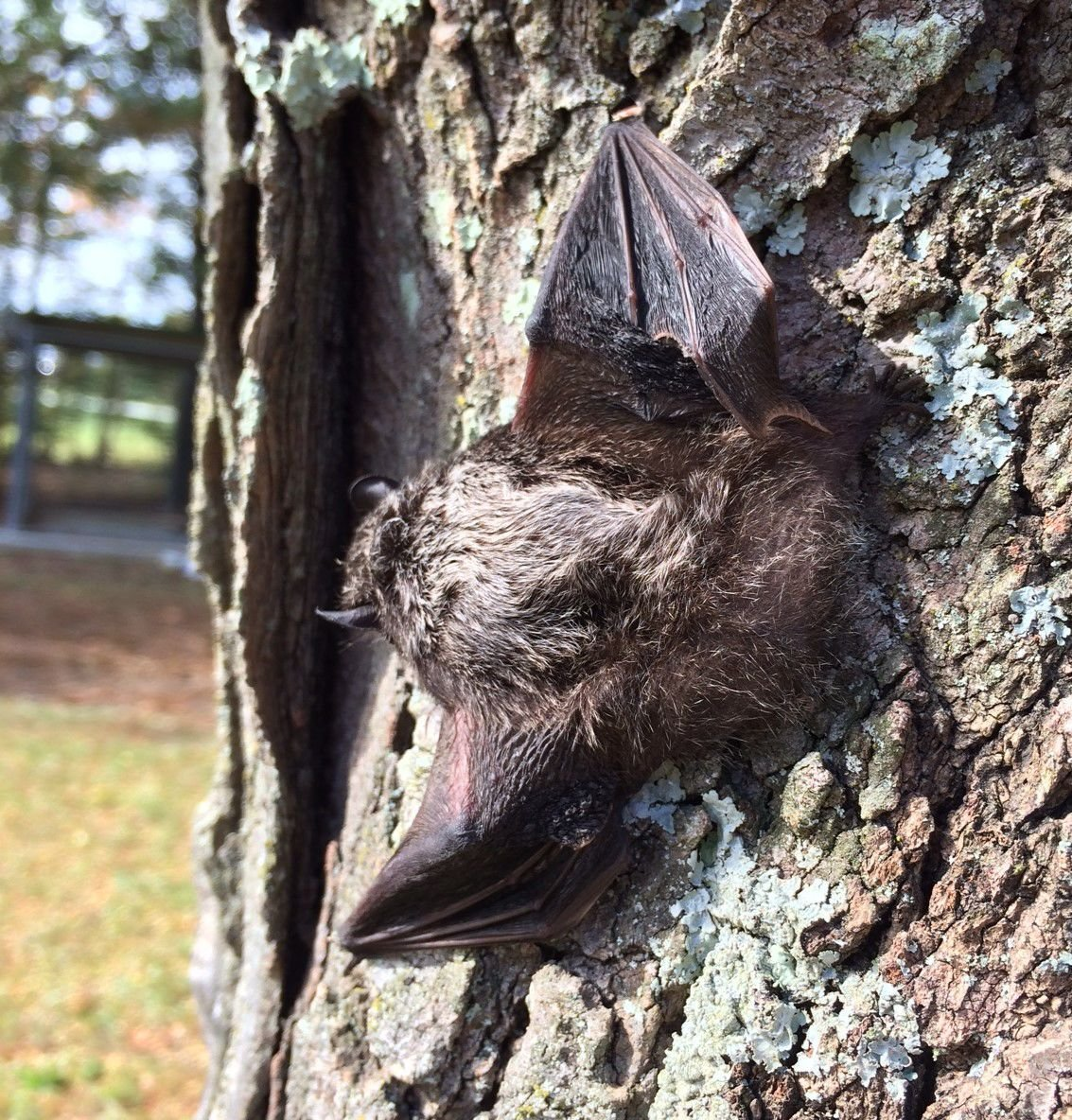 Bats on base: Those flying, fuzzy, beneficial mammals