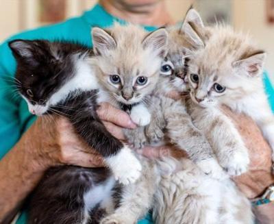 Temporary homes needed for kittens