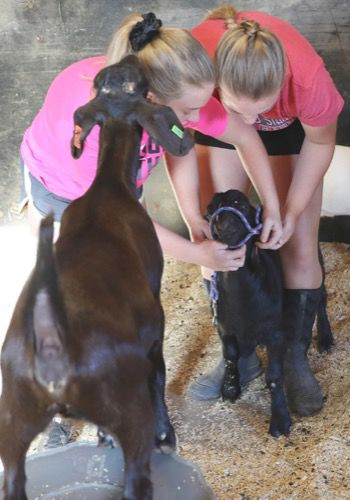 Learning life lessons a part of raising 4-H animals