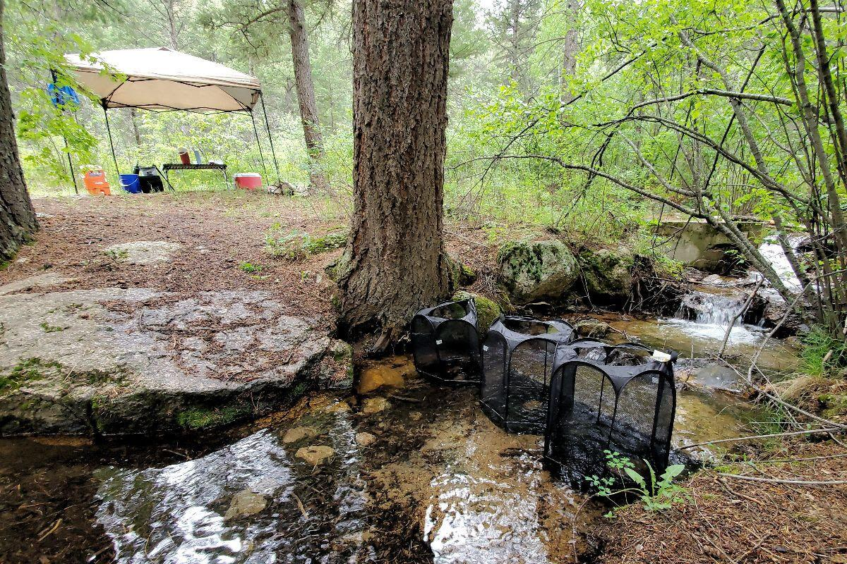 Cutthroat trout holding pens