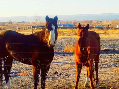 Charley horses