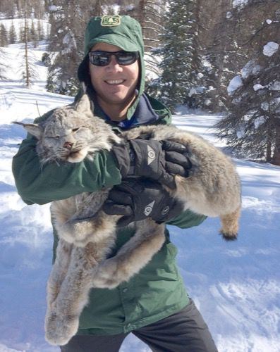 In search of the elusive Canada lynx