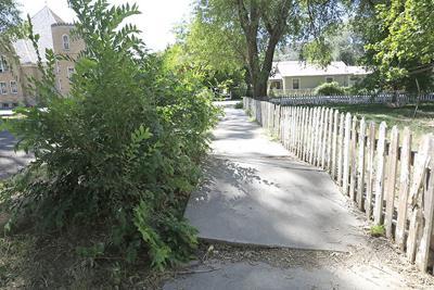 Sidewalk Paonia
