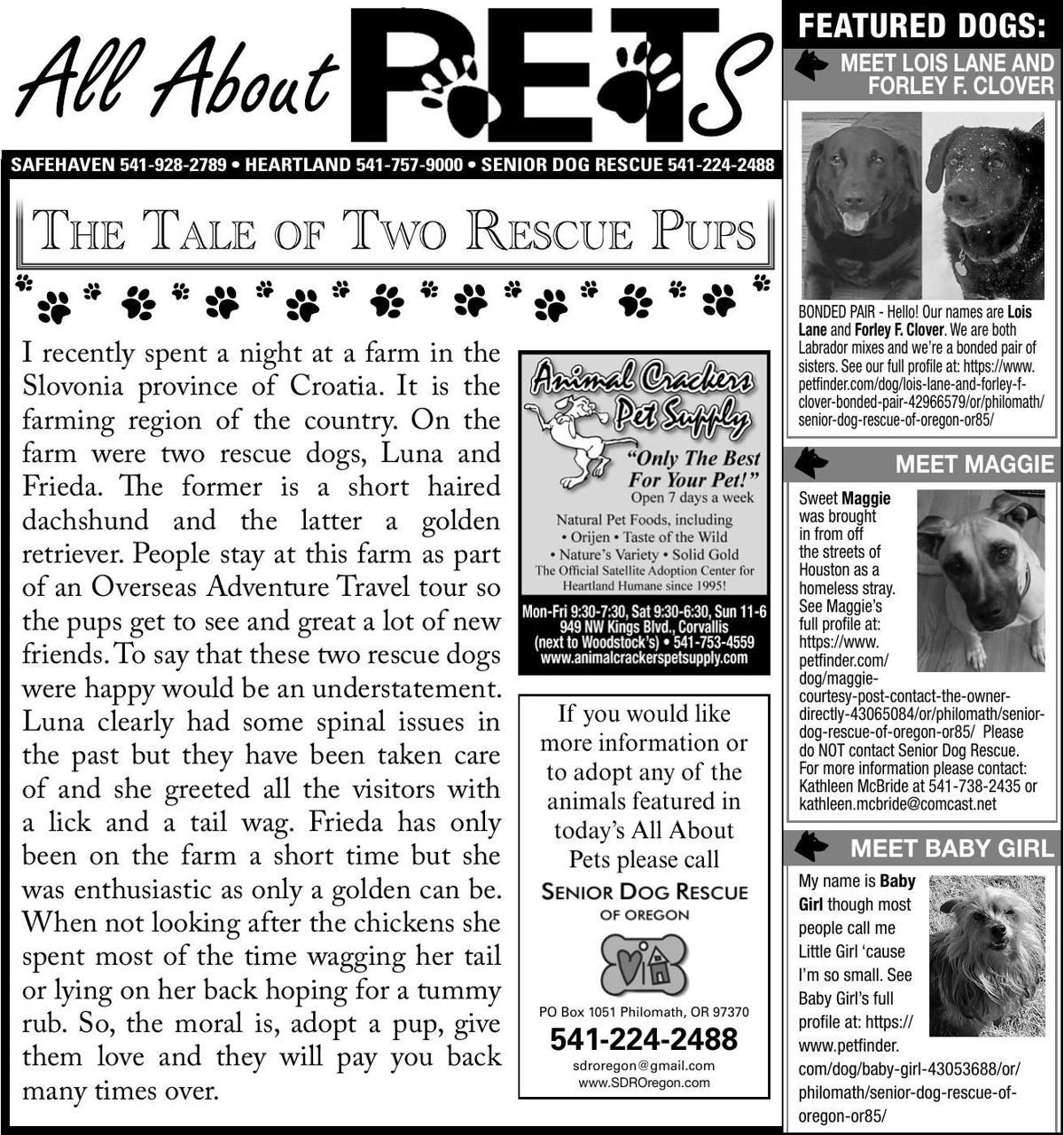83251-1 pdf | Ad Vault | democratherald com