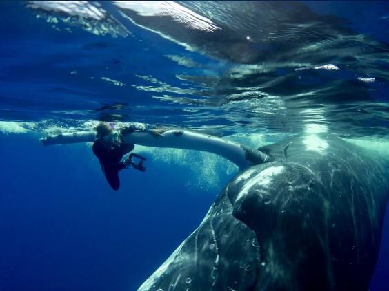 This whale came to the rescue of one lucky diver and the save was caught on video