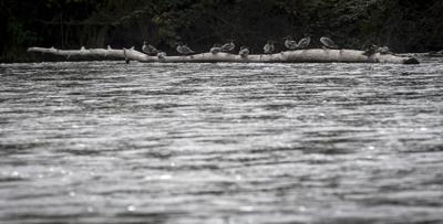 Willamette River (copy)